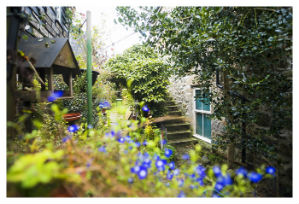 rent a cottage in mousehole abbey place